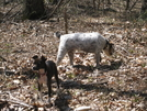 Lost Dog Sighted Near At Trailheads In Southwest Virginia (blacksburg) Area by Cowgirl Heart in Virginia & West Virginia Trail Towns