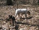 Lost Dog Sighted Near At Trailheads In Southwest Virginia (blacksburg) Area