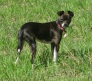 Lost Dog by Cowgirl Heart in Virginia & West Virginia Trail Towns