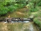 0008 2009.07.11 Little Amicalola Creek
