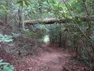 "0027 2009.07.12 Log ""bridge"" Over Trail"