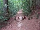 0029 2009.07.12 Three Forks Trail