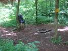 0032 2009.07.13 Cooper Gap Campsite
