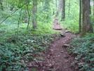 0033 2009.07.13 Justis Mountain Trail