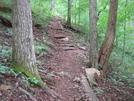 0034 2009.07.13 Georgia Trail