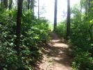 0037 2009.07.13 Georgia Trail