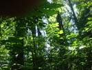 0049 2009.07.14 Bearcub In The Tree