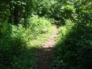 0050 2009.07.14 Blood Mountain Wilderness Trail