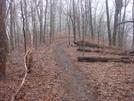 0071 2010.03.12 Trail On Levelland Mountain