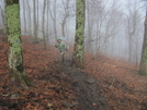0075 2010.03.12 Muddy Trail On Wildcat Mountain by Attila in Trail & Blazes in Georgia