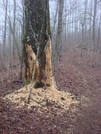 "0087 2010.03.13 Chattahochee Gap Trail ""birdfood"" Tree"