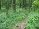 0120 2010.06.11 Tray Mountain Nobo Trail