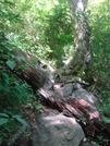 0161 2010.09.05 Big Butt Mountain Ascent