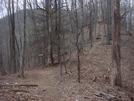 0213 2011.04.02 Grassy Gap by Attila in Trail & Blazes in North Carolina & Tennessee
