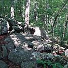 0262 Ridgecrest Hiking North Of Black Gum Gap by Attila in Trail & Blazes in North Carolina & Tennessee