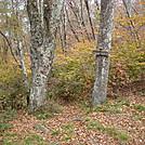0332 2011.10.10 Beechnut Gap