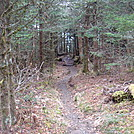 0353 2011.11.26 Trail North Of Clingmans Dome