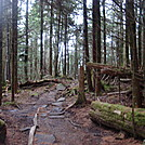 0354 Trail North Of Clingmans Dome by Attila in Trail & Blazes in North Carolina & Tennessee