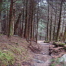 0355 2011.11.26 Trail North Of Clingmans Dome