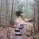 0365 2011.11.26 AT Between Fork Ridge Trail And Indian Gap