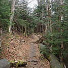 0377 2011.11.26 Trail North Of Indian Gap by Attila in Trail & Blazes in North Carolina & Tennessee
