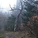 0386 2012.04.02 Sweet Heifer Creek Trail by Attila in Trail & Blazes in North Carolina & Tennessee