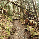 0415 2012.04.03 Trail South Of Tricorner Knob Shelter by Attila in Trail & Blazes in North Carolina & Tennessee