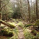 0416 2012.04.03 Trail South Of Tricorner Knob Shelter by Attila in Trail & Blazes in North Carolina & Tennessee