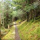 0420 2012.04.03 Trail North Of Tricorner Knob Shelter
