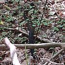 0443 2012.08.26 Rattle Snake