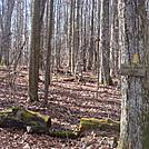 0463 2012.11.24 Rube Rock Trail by Attila in Trail & Blazes in North Carolina & Tennessee