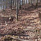 0464 2012.11.24 SOBO AT From Brown Gap
