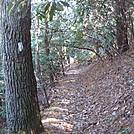 0490 2012.11.25 AT South Of Garenflo Gap