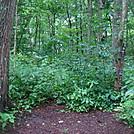 0528 2013.07.14 Little Paint Creek Trail