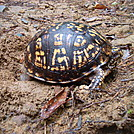 0530 2013.07.14 Turtle On Trail by Attila in Other