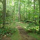 0535 2013.08.31 NOBO Trail From Little Laurel Shelter