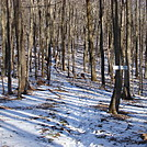 0557 2013.11.29 Side Trail To Hogback Ridge Shelter by Attila in Trail & Blazes in North Carolina & Tennessee