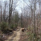 0613 2014.03.08 AT North Of Indian Grave Gap by Attila in Trail & Blazes in North Carolina & Tennessee