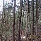 0622 2014.03.09 Trail North Of Unaka Mountain