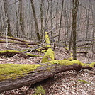 0623 2014.03.09 View South Of Cherry Gap Shelter by Attila in Views in North Carolina & Tennessee