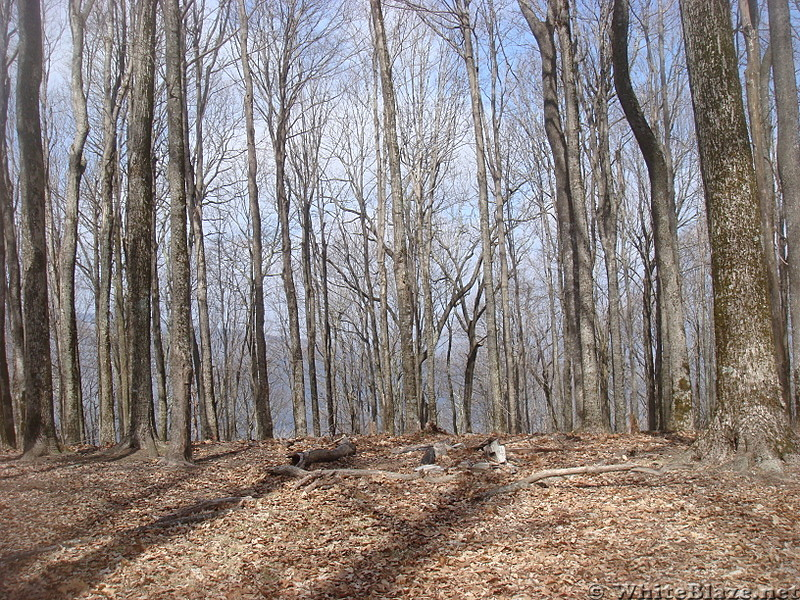 0625 2014.03.09 Campsite South Of Iron Mountain Gap