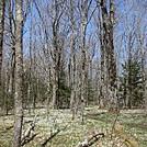 0640 2014.04.26 Ash Gap by Attila in Views in North Carolina & Tennessee