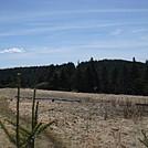0642 2014.04.26 Roan Mountain Gravel Road Parking Lot