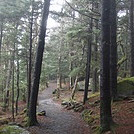 0656 2014.12.29 Trail North Of Carvers Gap by Attila in Trail & Blazes in North Carolina & Tennessee