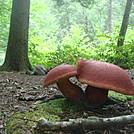 0720 2016.07.19 Mushrooms