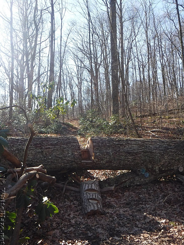 0750 2016.12.22 Tree On Trail
