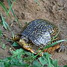 0846 2017.05.20 Turtle