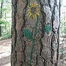 0869 2017.09.04 Sunflower Painting At Jenny Knob Shelter by Attila in Virginia & West Virginia Shelters