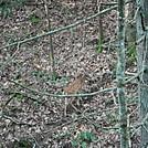 0872 2017.09.05 Deer