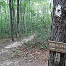 0878 2017.09.05 Dismal Creek Falls Sidetrail by Attila in Trail & Blazes in Virginia & West Virginia